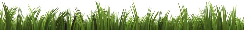 GrassBeds